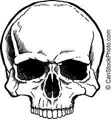 vit, svart, mänsklig skalle