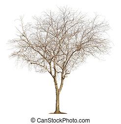 vit, träd, bakgrund