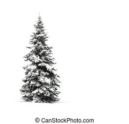 vit, träd, isolerat, fura