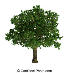 vit, träd, isolerat