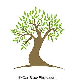 vita, albero