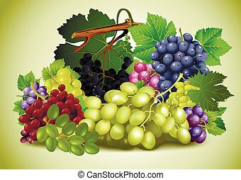 vita, ancora, uva