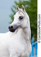 vita bygelhäst, stående, in, sommar