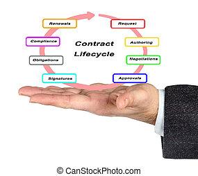vita, contratto, ciclo