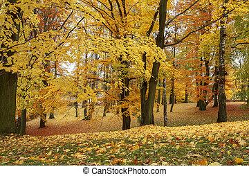 vita, foglie, giallo, autunno, ancora, acero