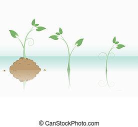 vita nuova, pianta, concetti