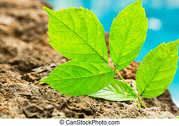 vita nuova, pianta verde