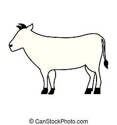 vita selvaggia, cartone animato, mucca, animale