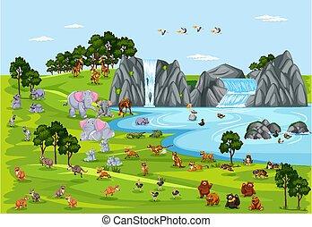 vita, selvatico, scena, animale, o, natura