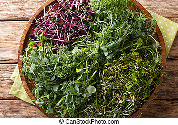 Vitamin dietary microgreen of peas, cilantro, mustard, radish rosso close-up on a plate on a table. horizontal top view