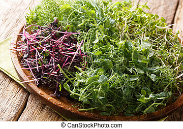 Vitamin dietary microgreen of peas, cilantro, mustard, radish rosso close-up on a plate on a table. horizontal