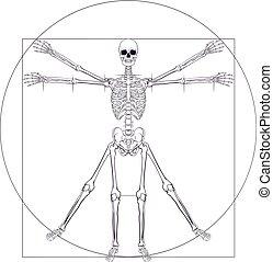 vitruvian, da, squelette, vinci, homme