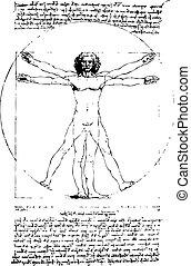 vitruvian, vetorial, homem