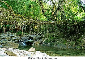 vivant, bridge:, village, héritage, nongblai, racines