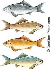vivant, ensemble, couleur, fish