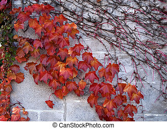vivd red leaves in fall