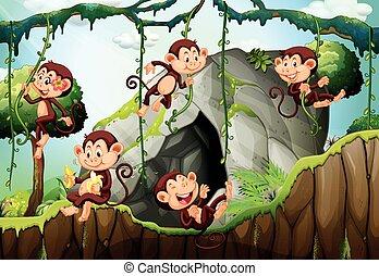 vivendo, cinco, floresta, macacos