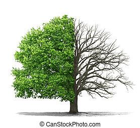 vivendo, conceito, árvore, morto, fundo, branca
