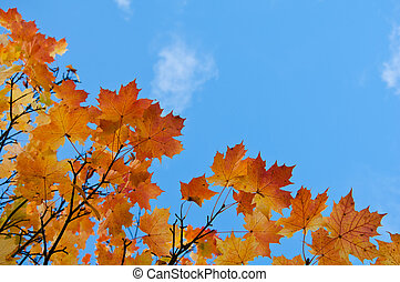 Vivid autumn leaves against the blue sky.