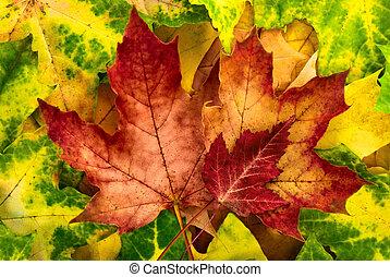 Vivid autumn leaves arrangement