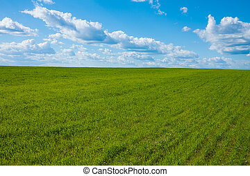 Vivid field and sky background