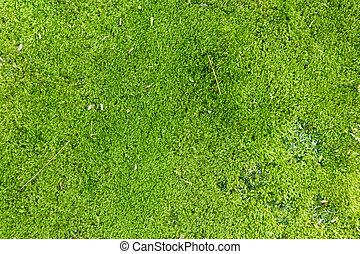 vivid green moss background