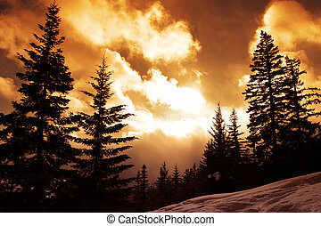 Vivid Pines - Winter Landscape