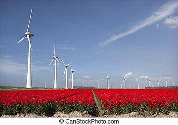 vivid red tulips in dutch noordoostpolder flower field with blue sky