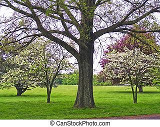 Vivid Spring - Beautiful Spring blossoms in Holmdel Park,...