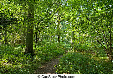 piece of a sunny green vivid forest with footpath in the middle
