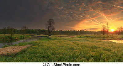 Vivid sunrise over meadow