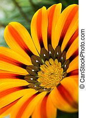 Vivid yellow flower