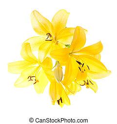 vivid yellow lilies