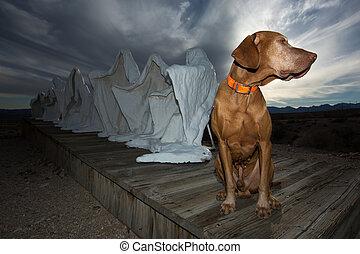 vizsla dog in Rhyolite ghost town