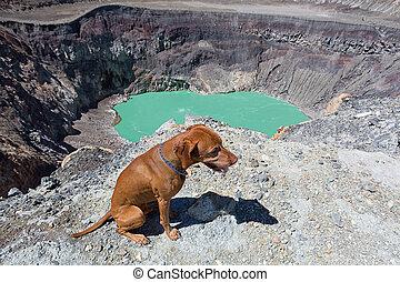 vizsla dog sitting at the edge of Santa Ana volcano crater in El Salvador