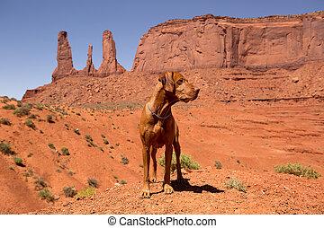 vizsla dog standing in red desert
