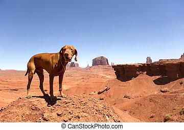 vizsla in the desert