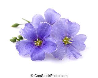 vlas, bloemen