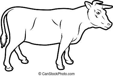 vleeskoe, illustratie