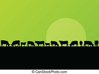 vleeskoe, platteland, illustratie, kudde, akker, vector, ...