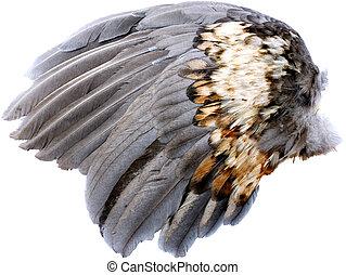 vleugel