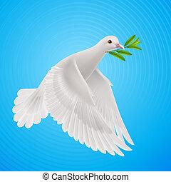 vlieg, duif