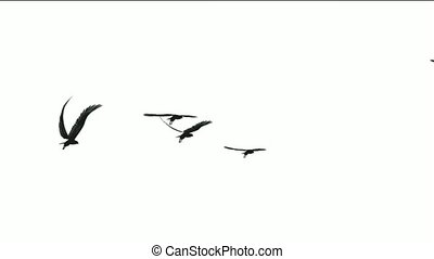 vlieg, vlucht, vogels, op