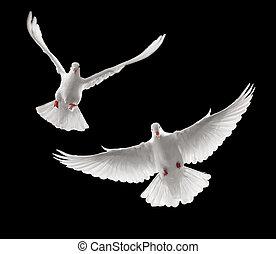 vliegen, duiven