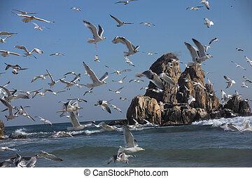 vliegen, seagulls