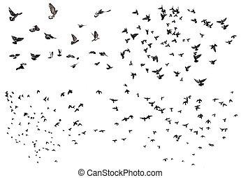 vliegen, set, vogels
