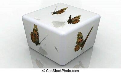 vliegen, vlinder, kubus, ongeveer, witte