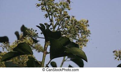 vliegend insect, op, bloem