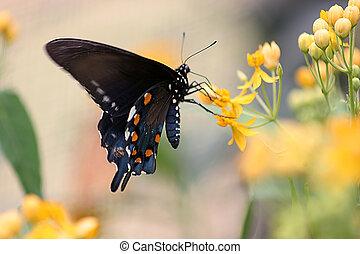 vlinder, 4