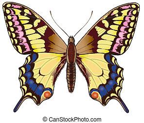 vlinder, 6